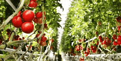 Crowdfunding Agriculture - Alimentaire
